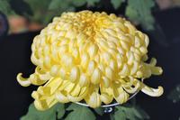 Yellow big Stock photo [2859265] Yellow