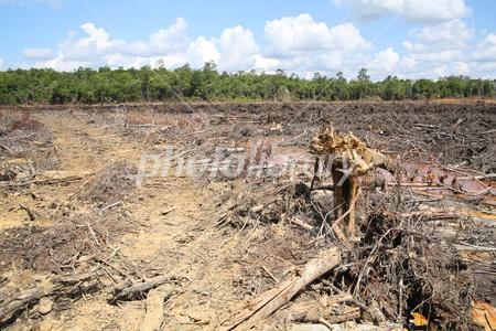 Environmental destruction deforestation Photo