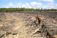 Environmental destruction deforestation Stock photo [2933430] Slash-and-burn