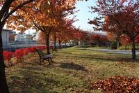 辰巳池の紅葉