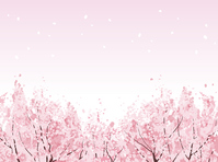 Cherry [2934031] Sakura