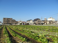 Kawagoe, Saitama Prefecture of field Stock photo [2936095] Field