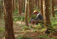 Thinning of cypress Stock photo [3016893] Kanagawa