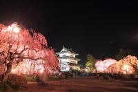 Hirosaki Castle tower night view of spring Stock photo [3017509] Night