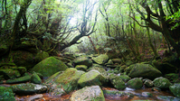World Natural Heritage Yakushima Forest Mononoke Shiratani Unsuikyo Stock photo [3021265] Yakushima