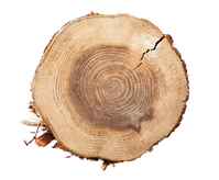 The stump on white background Stock photo [3022222] Stump