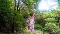 World Natural Heritage Yakushima Jomon cedar (big tree of old 7 thousand years) Stock photo [3026317] Yakushima