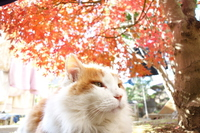 Autumn leaves and cat Stock photo [3026853] CAT