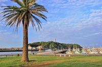 Palm trees Stock photo [3102905] Fujisawa