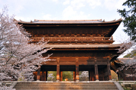 Kyoto Nanzenji Sanmen and cherry Stock photo [3104393] Nanzen