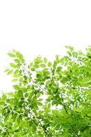 Fresh green Stock photo [3105474] Fresh