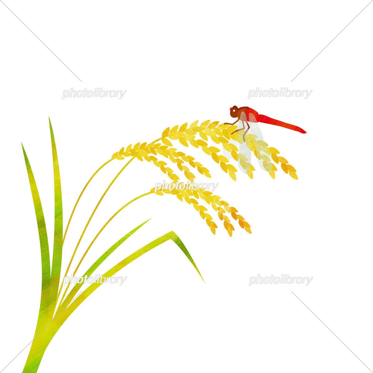 稲穂と赤とんぼ イラスト素材 3208551 フォトライブラリー