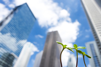 Sprouts and skyscrapers Stock photo [3200228] Bill