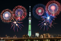 Fireworks and Sky Tree Stock photo [3203035] Fireworks