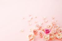Rose Stock photo [3207517] Rose
