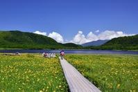 Oguni-numa Pond wetlands of day lily Stock photo [3207783] Male