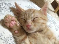 Maneki Neko Stock photo [3314667] CAT