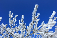 The rime on trees and a blue sky Stock photo [3399245] Rime