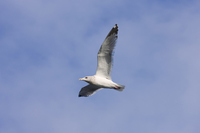 The Seagull Stock photo [3494989] The