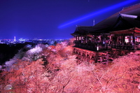 Kiyomizu Temple of spring night special admission stock photo