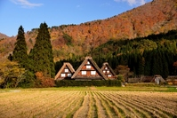 Gassho village that was steeped in autumn Stock photo [3496908] Shirakawa-go