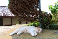 Cat Tashiro Island Stock photo [3497337] Miyagi