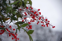 Southern sky Stock photo [3504161] Nandina