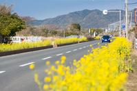 Boso Flower Line Stock photo [3599208] Chiba