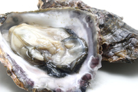 Of raw oysters Me Bare Stock photo [3599494] Raw