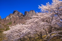 Mount Myōgi and cherry Stock photo [3599956] Mount