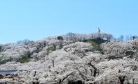 Spring of Miyagi Prefecture Funaoka Castle Park Stock photo [3601937] Cherry