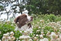 Border collie Stock photo [3605803] Dog