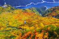 Kurobeko and autumn leaves from Daikanbo Tateyama Stock photo [3607131] Tateyama