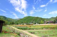 Woodlands of terraced rice fields and amaryllis Stock photo [3705824] Satoyama