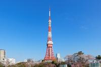 Shiba Park Tokyo Tower of cherry blossoms Stock photo [3709430] Tokyo
