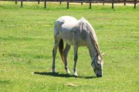 White horse Stock photo [3714176] White