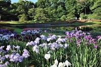 二の丸庭園菖蒲田