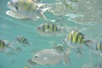 パヤ島の魚