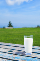 Milk Stock photo [3926744] Pasture