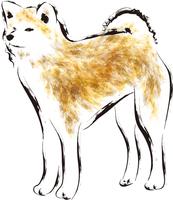 秋田犬の写真素材 人気順 フォトライブラリー Photolibrary