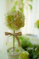 Topiary Gift Stock photo [3929486] Topiary