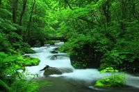 Aomori Prefecture summer Oirase Stream Stock photo [3930747] Aomori