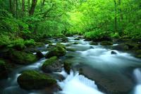 Flow of Aomori Prefecture Oirase Stream three turbulent Stock photo [3930759] Aomori