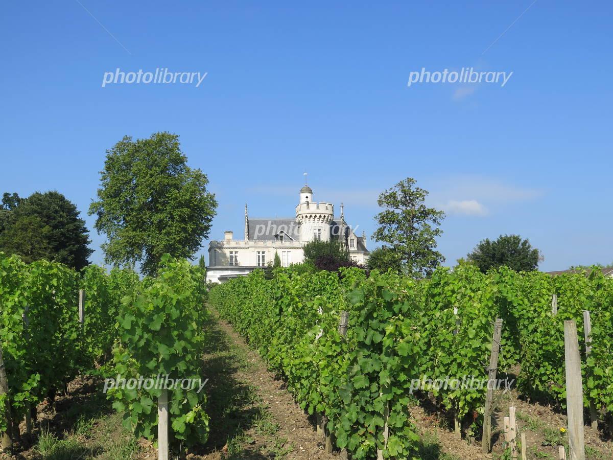 Bordeaux vineyards Photo