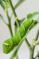 Caterpillar Stock photo [4016230] Larva