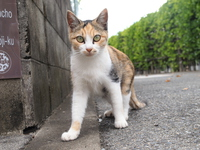 Corner of tortoiseshell cat Stock photo [4019554] Cat