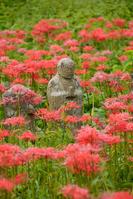 Jizo and amaryllis Stock photo [4019998] Ksitigarbha