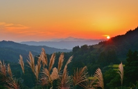 Sunset over the ears swaying Yamakoshi mountains of Miscanthus sinensis Stock photo [4020062] Yamakoshi