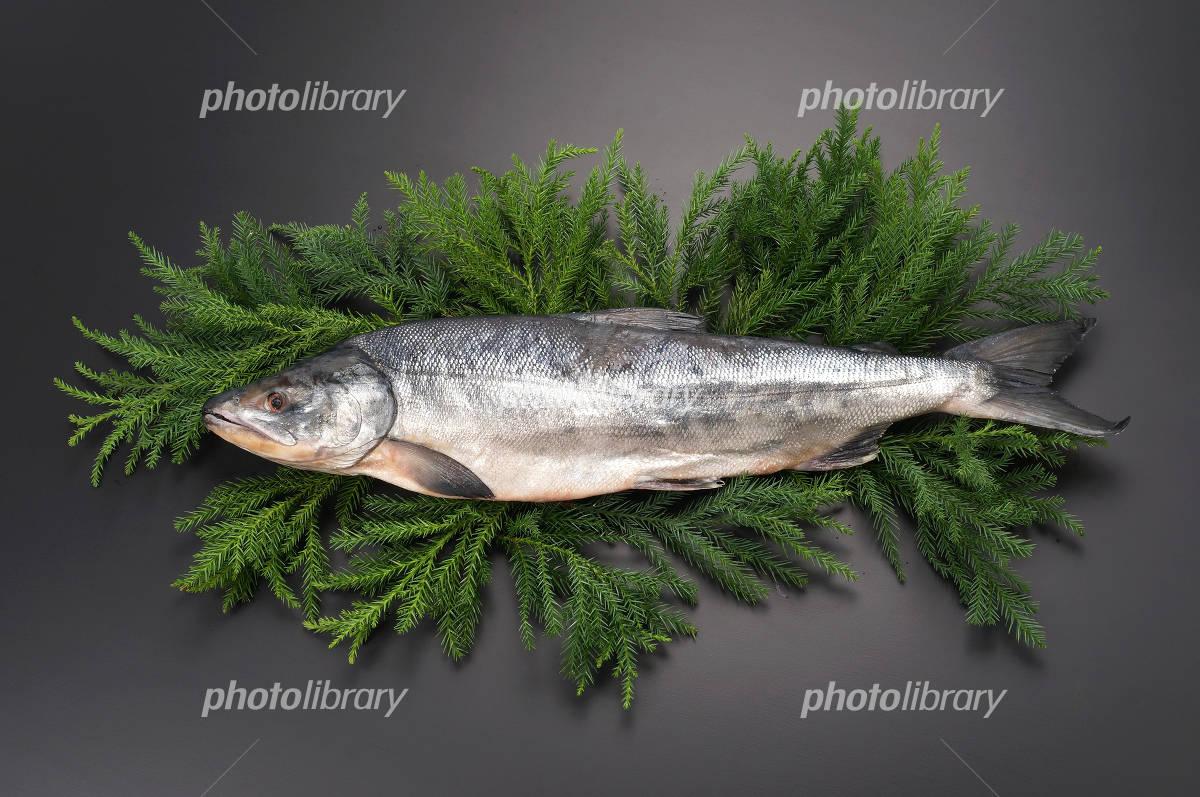 Aramaki salmon 1 Oklo back cedar leaf Photo