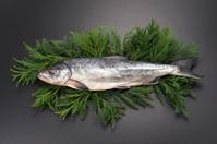 Aramaki salmon 1 Oklo back cedar leaf Stock photo [4099847] Aramaki